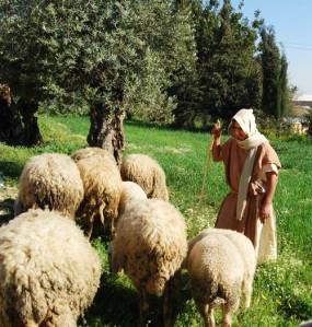 shepherd_nazareth-village_sm